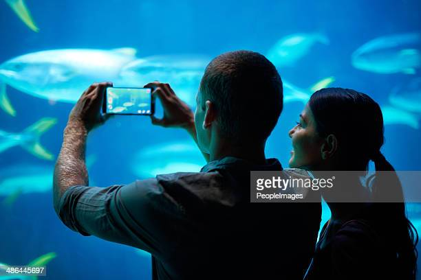 Sea-life snapshots
