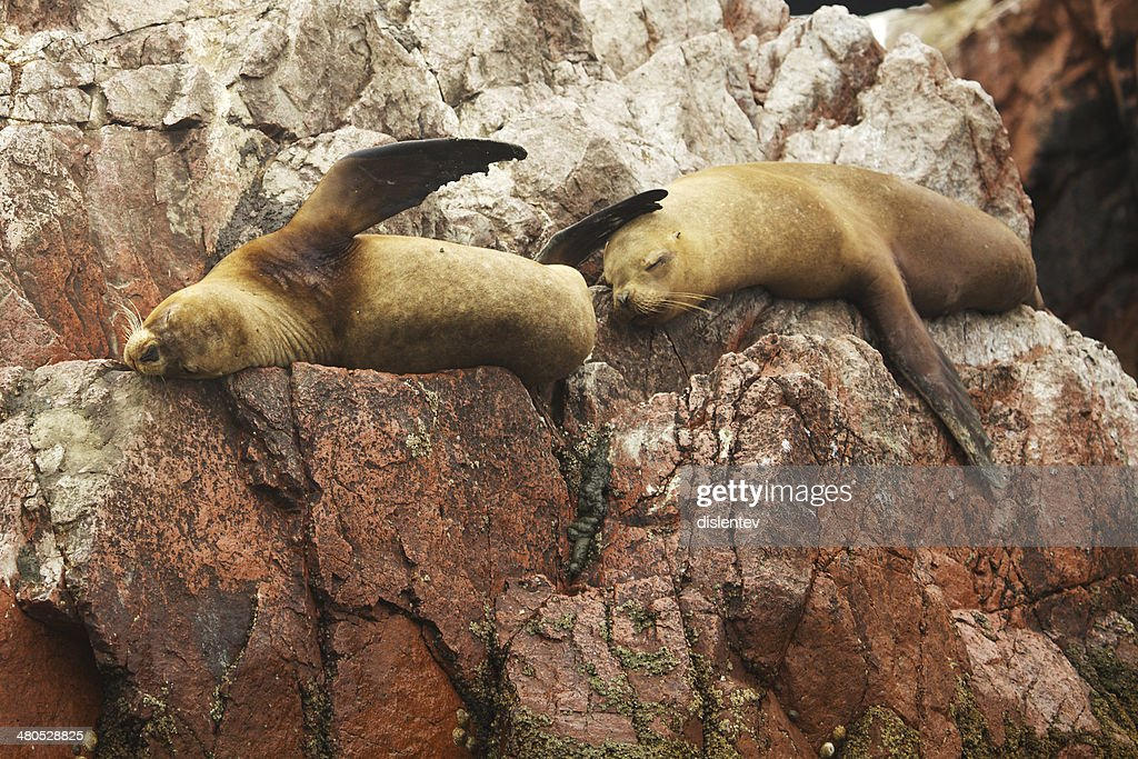 Seals : Stock Photo