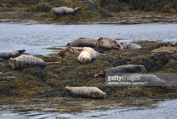 Seals relaxing on a rock
