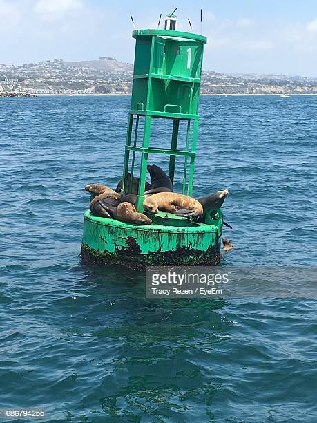 Seals Relaxing On Buoy In Sea