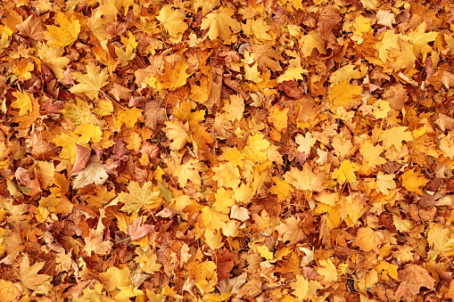 Seamless autumn leaves background 995531202