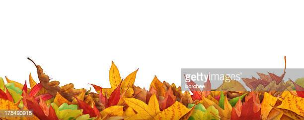 Seamless Autumn Leaves