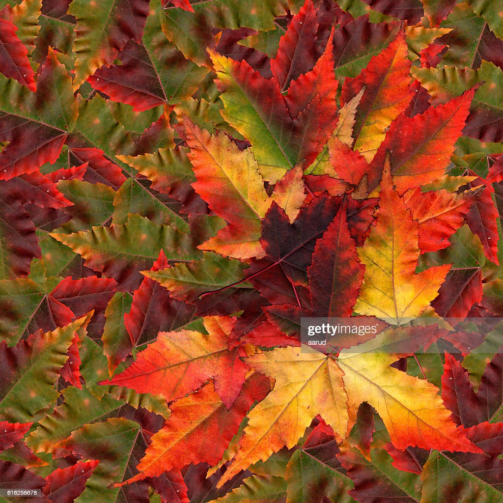 seamless background pattern texture made of maple leaves : Foto de stock