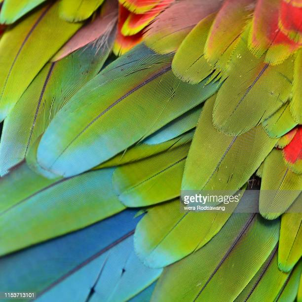 seamless pattern made from colorful scarlet macaw feathers, texture background - pájaro tropical fotografías e imágenes de stock