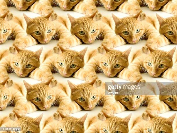 Seamless pattern of ginger cat