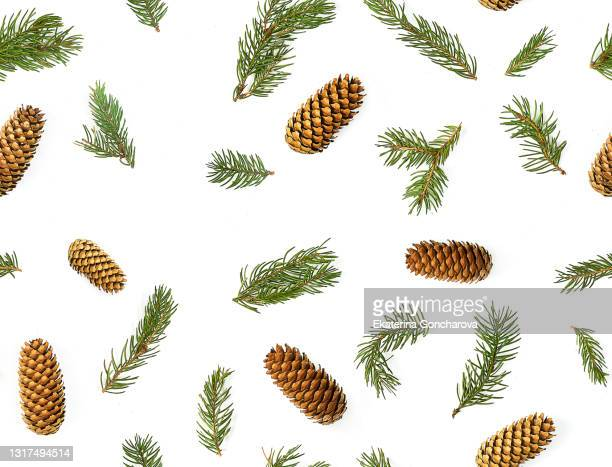 a seamless pattern of scattered christmas tree twigs and cones on a white isolated background. - branch stock pictures, royalty-free photos & images