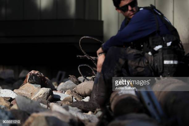 A search and rescue dog rests on a rock while searching for people in mudslide debris on January 10 2018 in Montecito California 15 people have died...