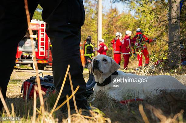 Search and Rescue dog with firefighters in the background