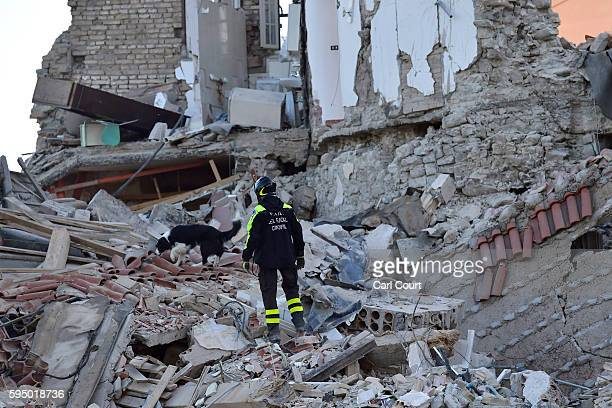A search dog works in the remains of a building that collapsed after being struck by an earthquake on August 25 2016 in Amatrice Italy The death toll...
