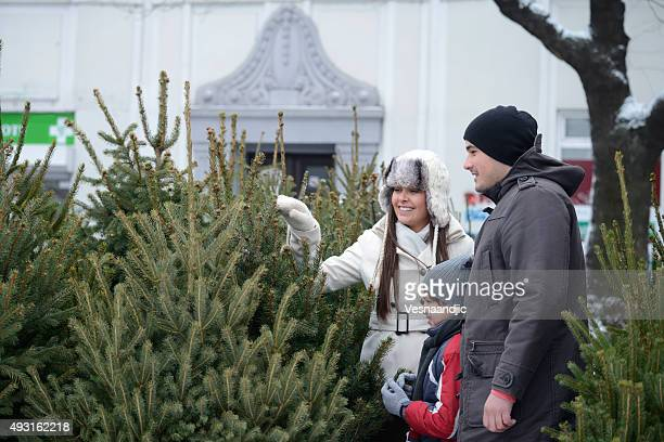 Searching for perfect Christmas tree