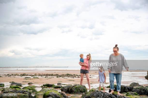 söka efter sand varelser - tidvattensbassäng bildbanksfoton och bilder
