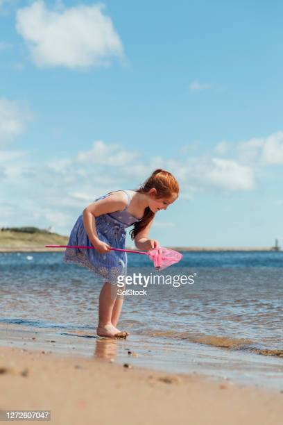 searching for shells - summer stock pictures, royalty-free photos & images