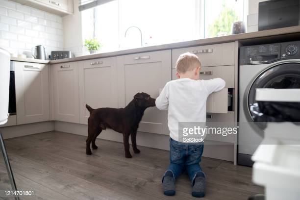 searching the kitchen! - terrier stock pictures, royalty-free photos & images