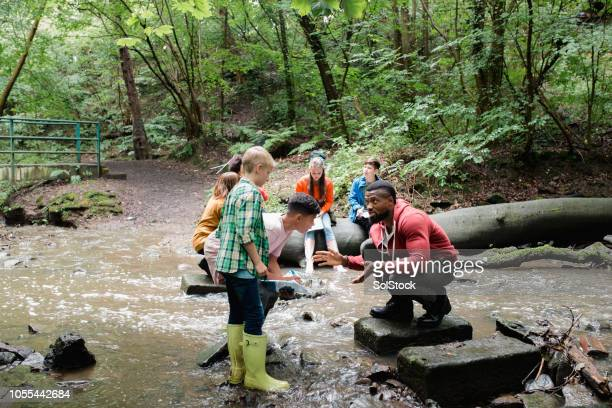 searching the river for wildlife - outdoors stock pictures, royalty-free photos & images