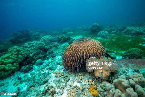 seascape in the visayas archipelago, philippines - provincia de cebú fotografías e imágenes de stock