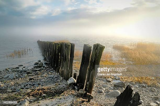 Seascape of pilings on beach