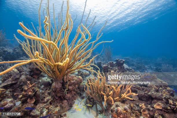 seascape of variety of soft coral, curacao - soft coral stock pictures, royalty-free photos & images