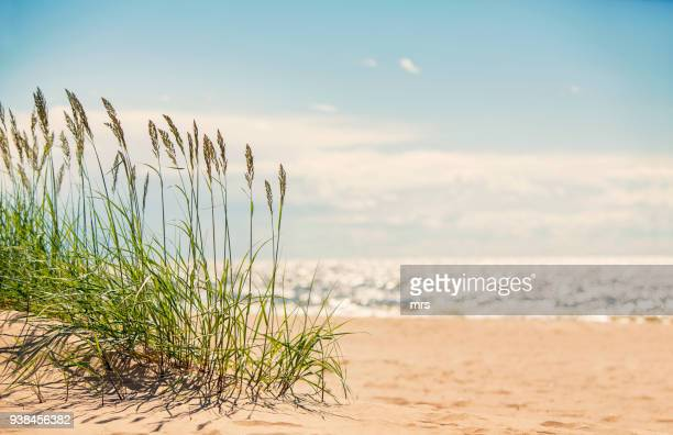 seascape - coastline stock pictures, royalty-free photos & images