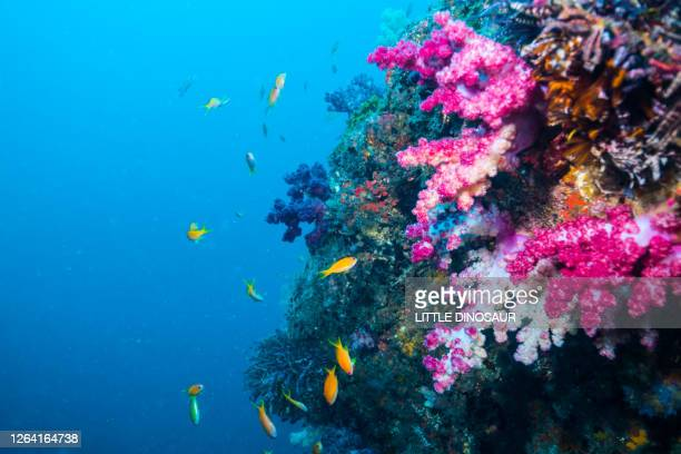 seascape. reef edge of colorful soft coral and blue water back ground - coral stock pictures, royalty-free photos & images