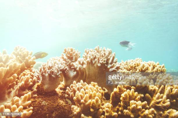 seascape with coral and fishes in great barrier reef, australia - couleur corail photos et images de collection