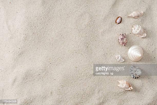 シーシェルとビーチの砂