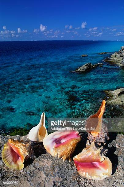 seashell arrangement on isla mujeres - isla mujeres stock photos and pictures