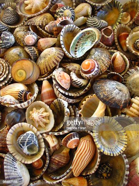 seashell assortment - coffs harbour stock pictures, royalty-free photos & images