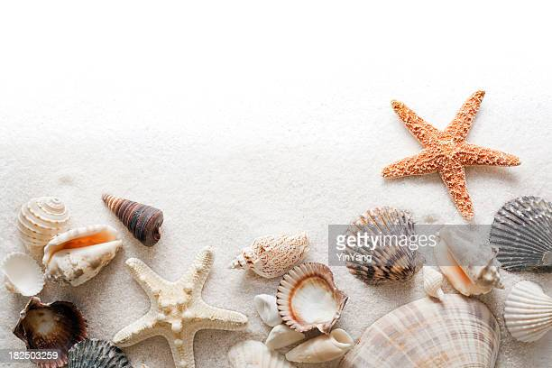 Seashell, Beach Sand and Starfish Frame Border on White Background