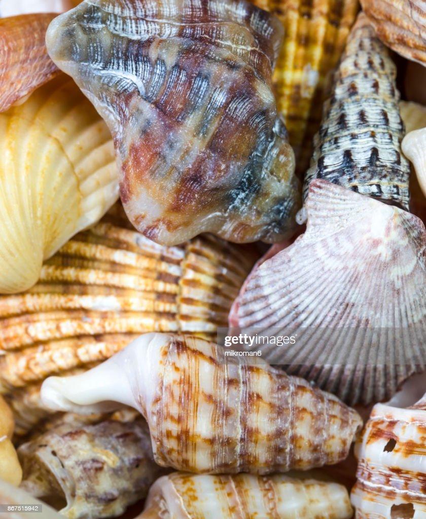 Seashell close up : Stock Photo