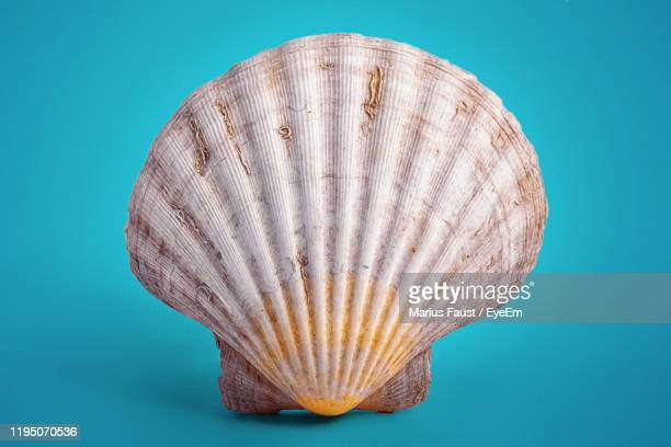 seashell - digital painting - seashell stock pictures, royalty-free photos & images