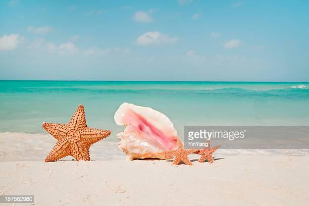 Seashell Family in Tropical Beach Paradise