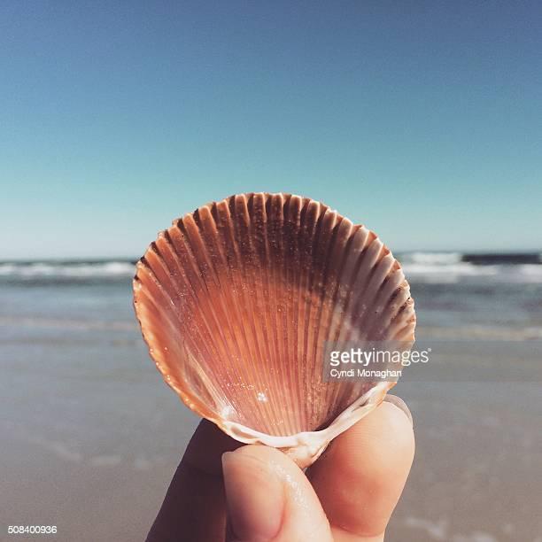 Seashell Found