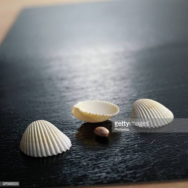 Seashell Game