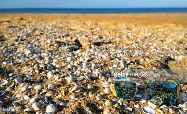 seashell in faro beach on hot summer day, sunglasses in foreground. - faro city portugal stock photos and pictures