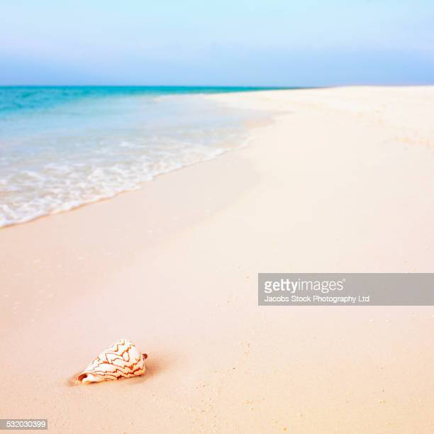 Seashell in sand on beach