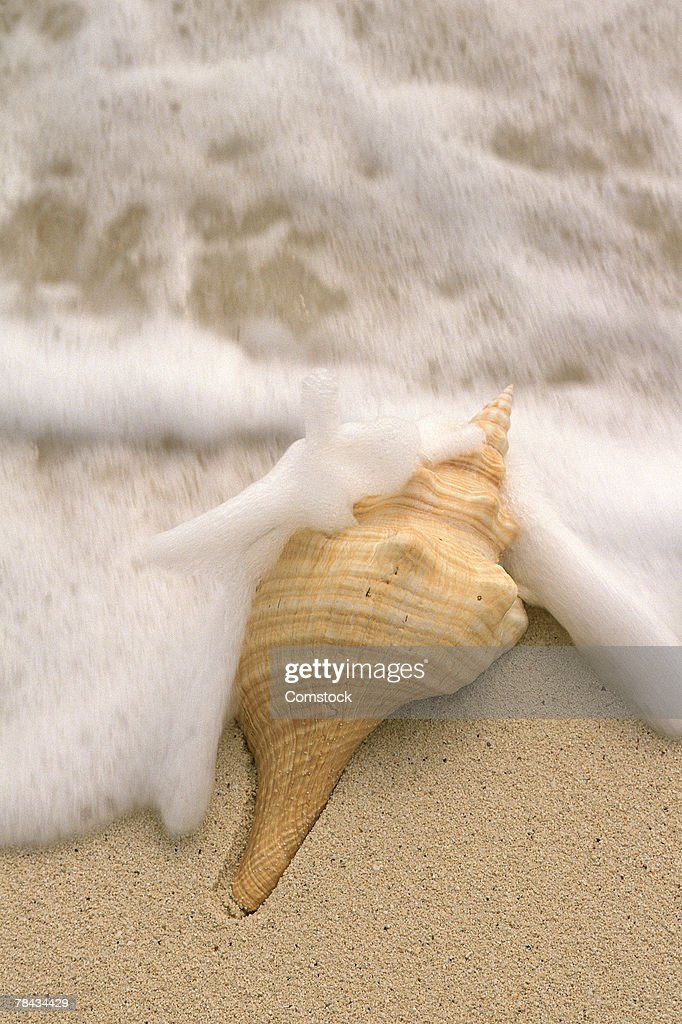 Seashell on beach as tide comes in : Stockfoto