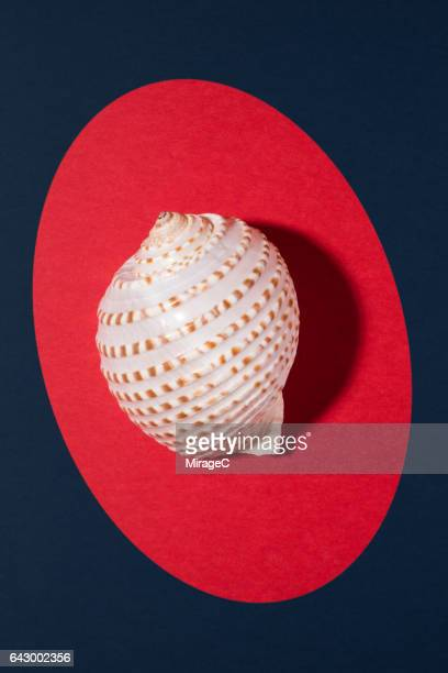 Seashell on Colored Background
