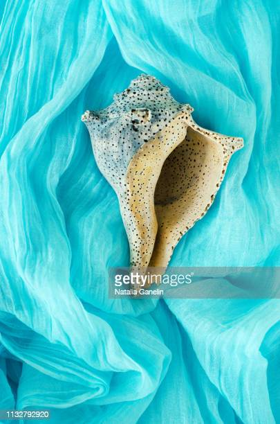 seashell on light blue background - seashell stock pictures, royalty-free photos & images