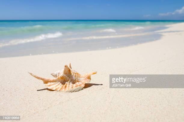 Seashell on ocean beach