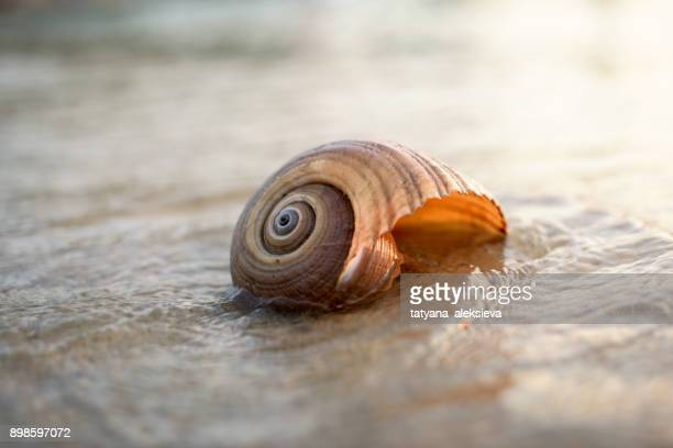 seashell on the beach at sunset - seashell stock pictures, royalty-free photos & images