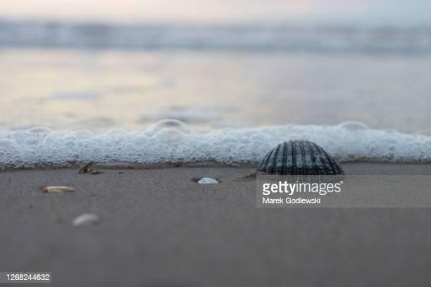 seashell (cockles) on the beach, foamy wave, curracloe, co. wexford, ireland - ウェックスフォード州 ストックフォトと画像