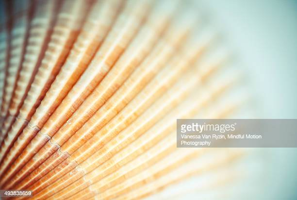 seashell - vanessa van ryzin stock photos and pictures