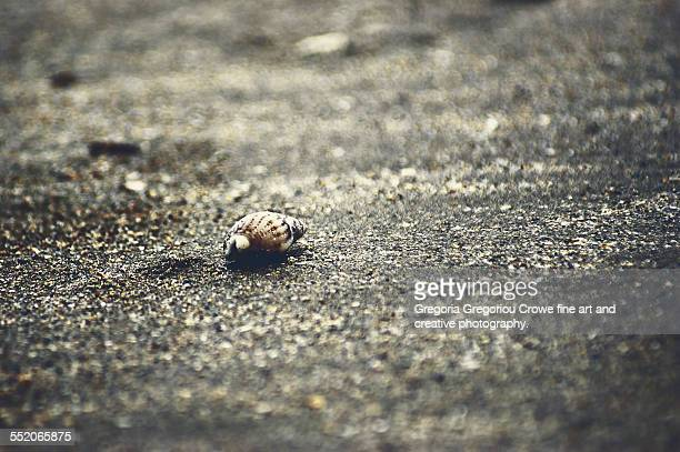 seashell - gregoria gregoriou crowe fine art and creative photography stock photos and pictures