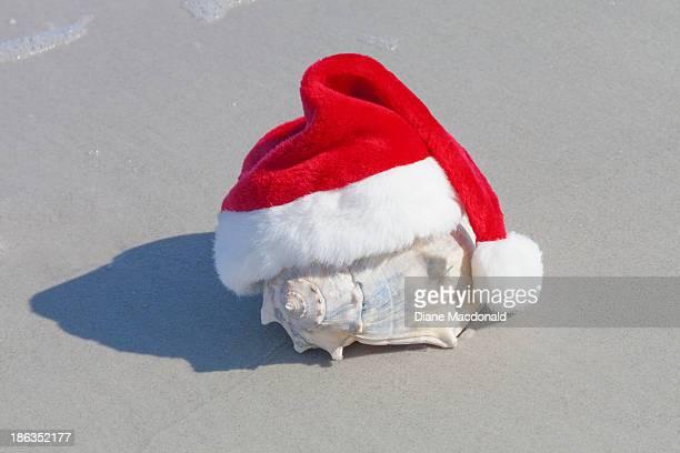 A seashell wearing a Santa Hat at the beach