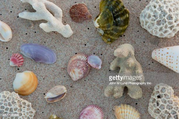 Seashells and coral on sandy beach