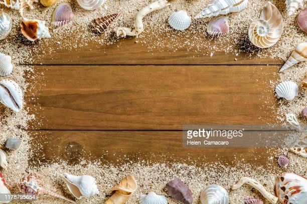 Worlds Best Seashell Wallpaper Border Stock Pictures