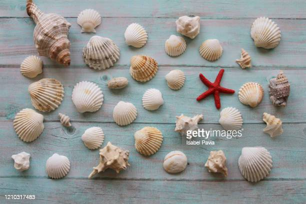 seashells and starfish over rustic background. flat lay. - seashell stock pictures, royalty-free photos & images