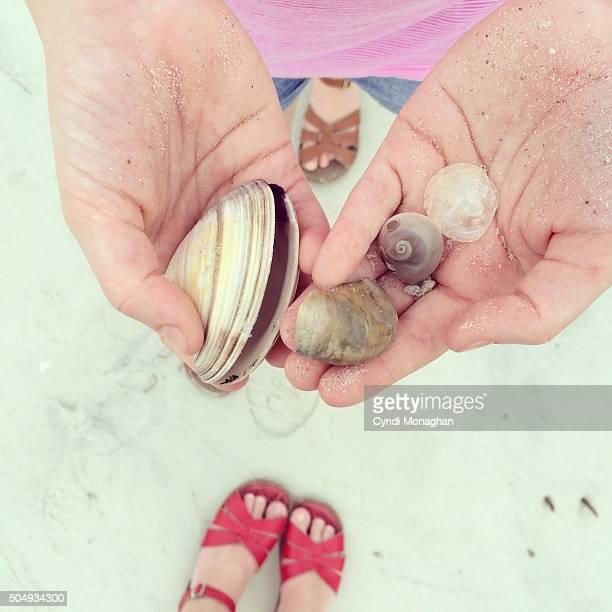 Seashells Found