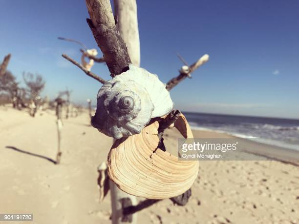 Seashells Hanging from Branches on Assateague