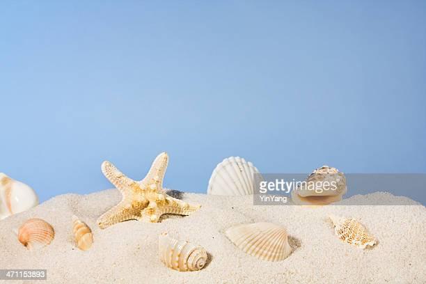 Coquillages sur la plage de sable, Étoile de mer et des coquillages en ciel d'été